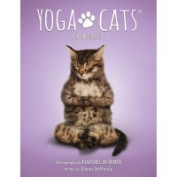Yoga Cats Cards Deck and Book Set