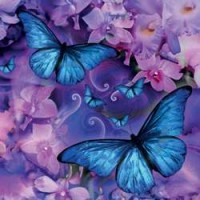 Butterfly Greeting Card with CD