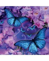 Butterfly Greeting Card with CD Mystic Convergence Wiccan Supplies, Pagan Jewelry, Witchcraft Supplies, New Age Store