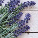 Lavender Oil Blend at Mystic Convergence Metaphysical Supplies, Metaphysical Supplies, Pagan Jewelry, Witchcraft Supply, New Age Spiritual Store
