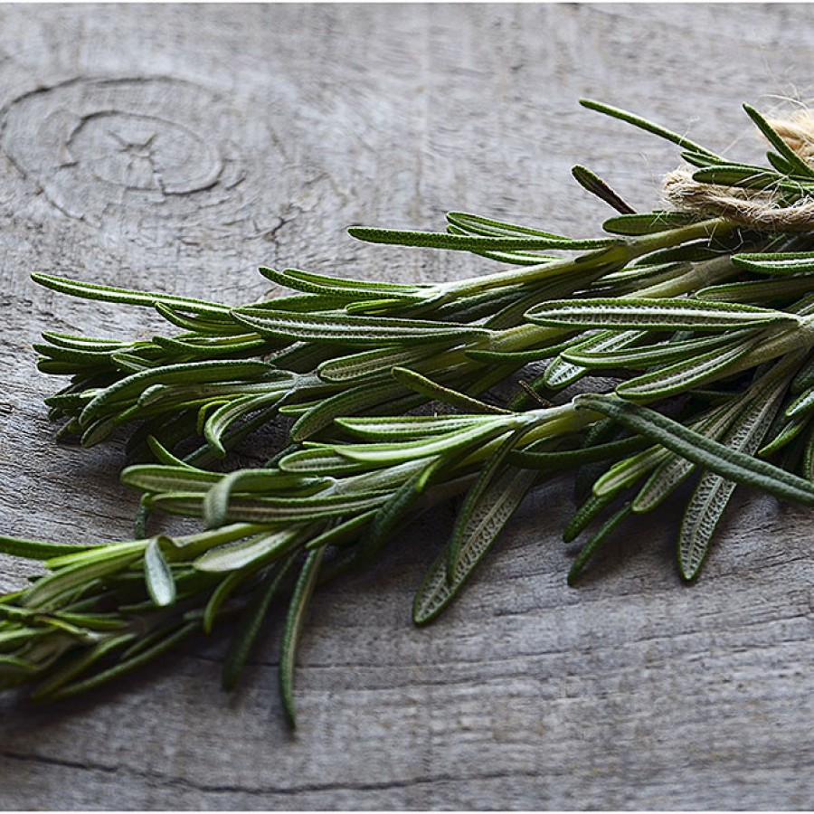 Rosemary Essential Oil - Wicca, Witchcraft, Aromatherapy Oil
