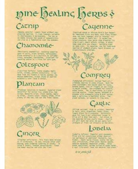 9 Healing Herbs Parchment Poster at Mystic Convergence Metaphysical Supplies, Metaphysical Supplies, Pagan Jewelry, Witchcraft Supply, New Age Spiritual Store