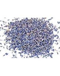 French Lavender Flower Ultra Blue Buds