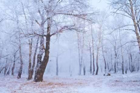 Winter Magick: Study and Reflection