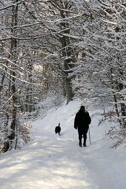 making magic in winter can be as simple as a long walk in the snow to reflect and recharge